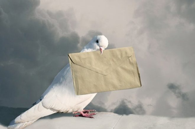Почтовые голуби популярны сейчас