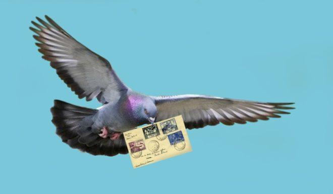 Почтовые голуби востребованы и сейчас