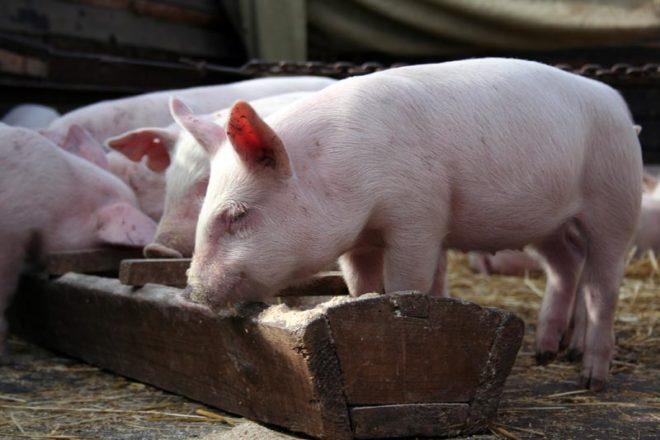 От качества и состава корма зависит работа пищеварительной системы животного