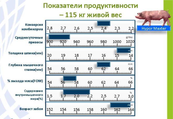 Показатели гибрида Maxter 304