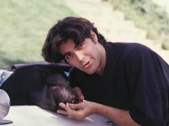 Свинья Джорджа Клуни прожила 19 лет