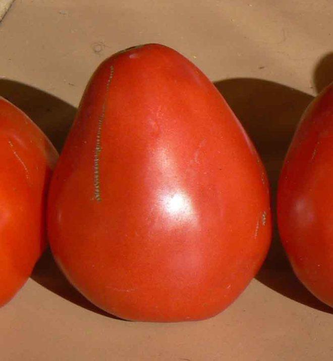 """Полив и пасынкование томатов """"Буденовка"""" необходимы"""