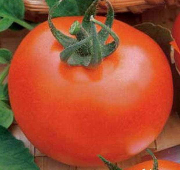 """Раннеспелые томаты """"Ирина"""" вкусны"""