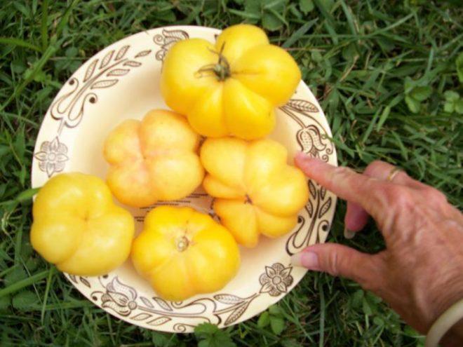 """Томаты """"Микадо"""" вкусны, урожайны и красивы"""