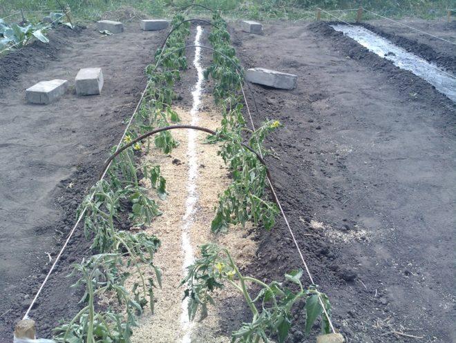 Удобрение земли в теплицах обязательно