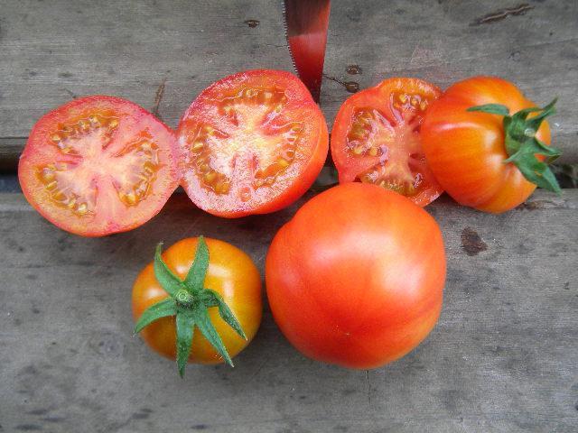 Ульраскороспелые томаты созревают в течение 70 дней