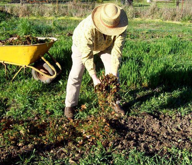 Правильная подготовка почвы необходима