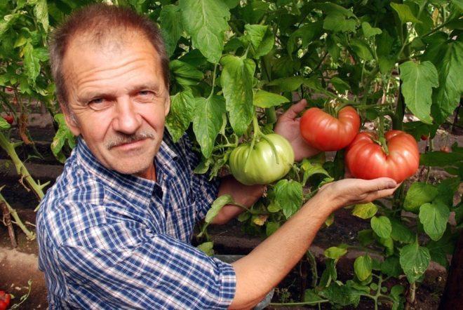 Для щедрого урожая следует соблюдать технологию выращивания