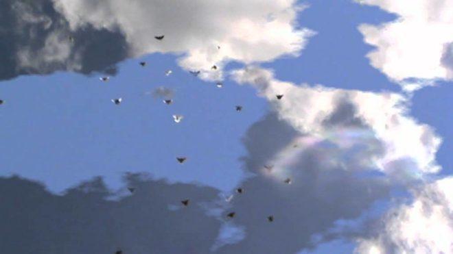 Высоколетные голуби очень красивы в небе
