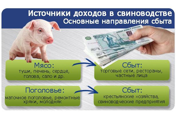 Источники дохода в свиноводстве
