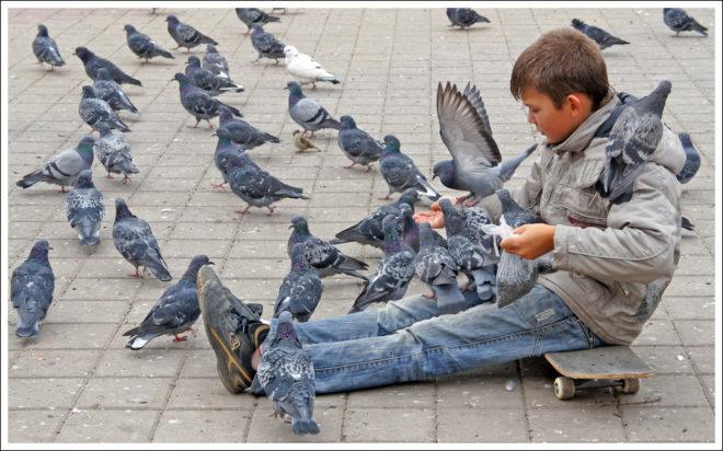 Тесный контакт с птицами нежелателен