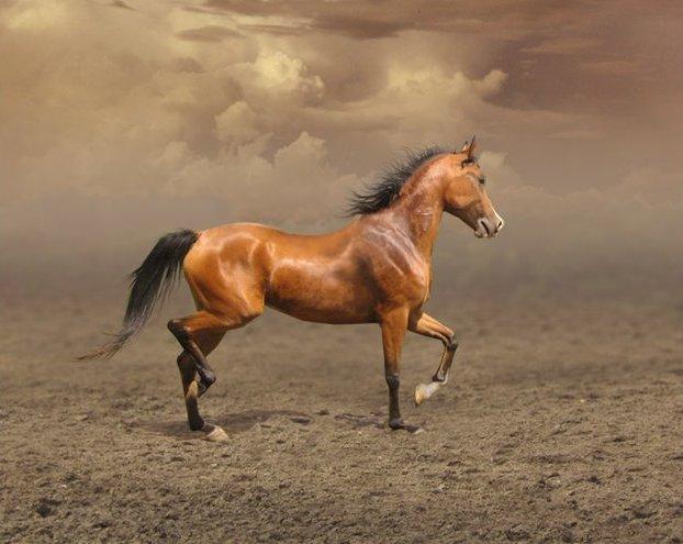 Скаковые лошади очень дорогие