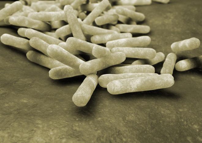 Паратиф свиней - инфекционное заболевание ЖКТ