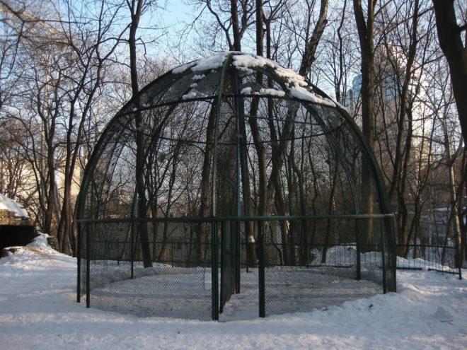 Зимой павлинов нужно содержать в отапливаемом помещении