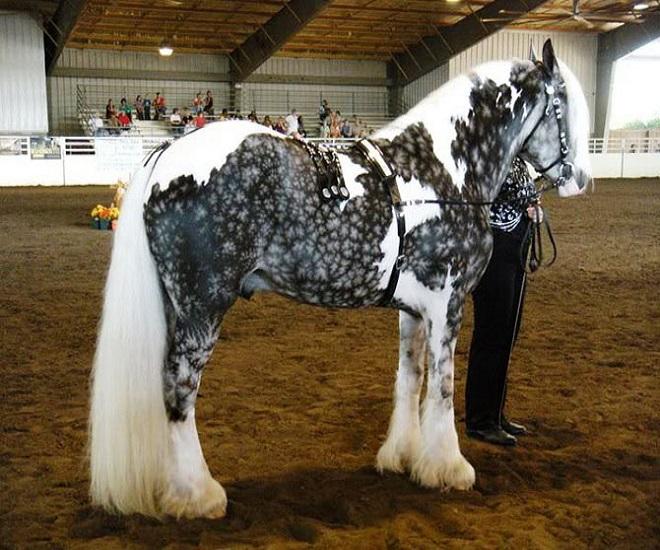 Рисунки на теле пегой лошади очень разнообразны