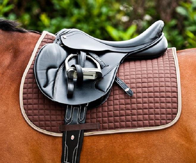 Вальтрап и потник для лошади нужны для защиты спины животного