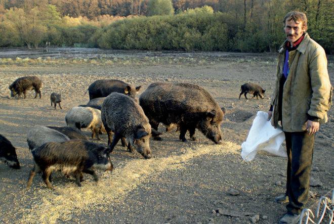 Возможна организация экскурсий к местам жительства зверей