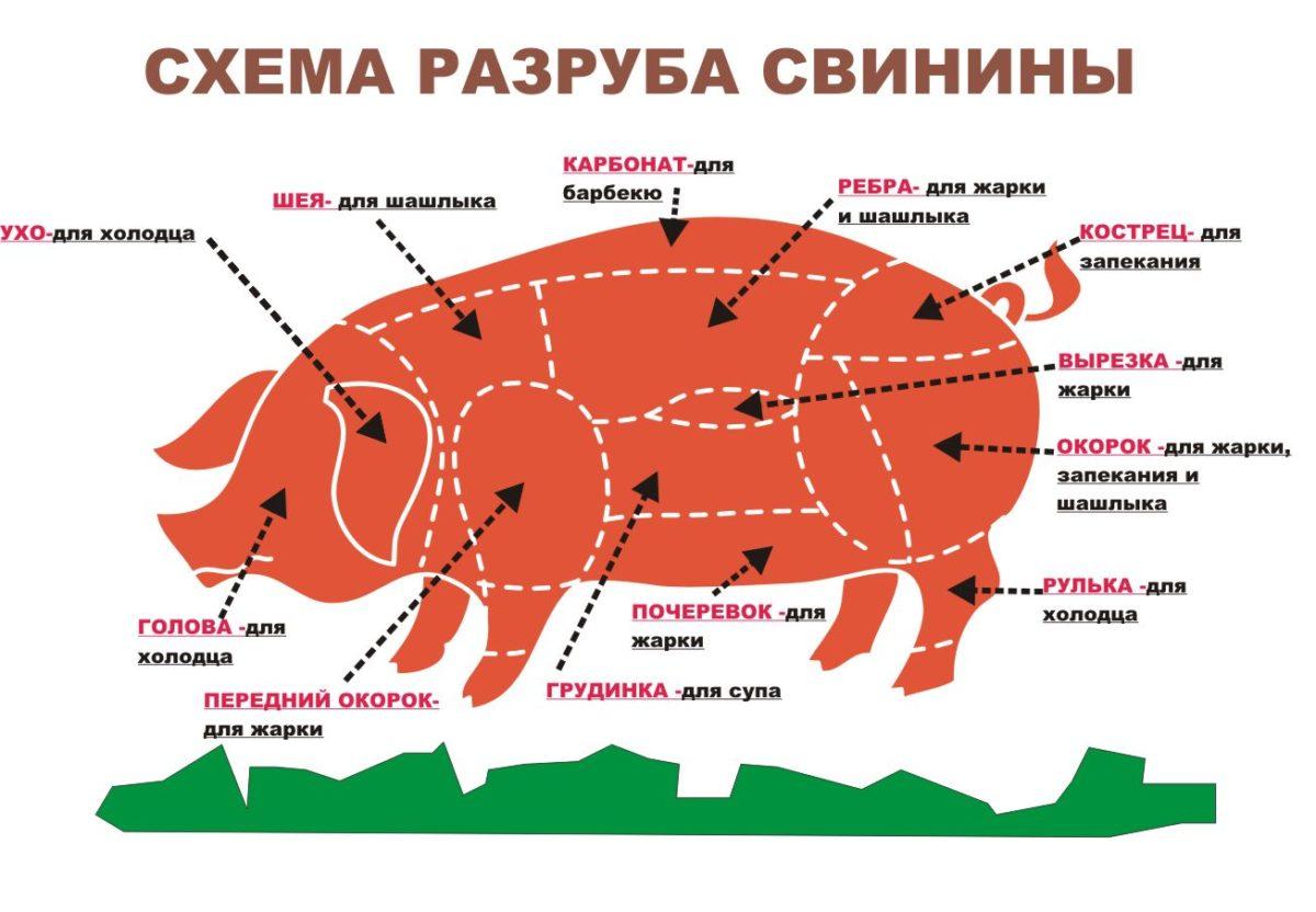 Схема разруба свиньи