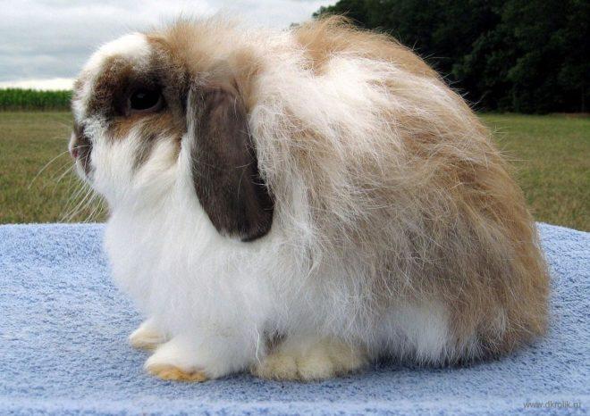 Кролики продаются в питомниках