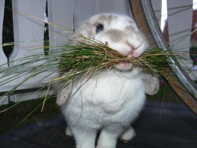 Рацион кроликов содержит зелень