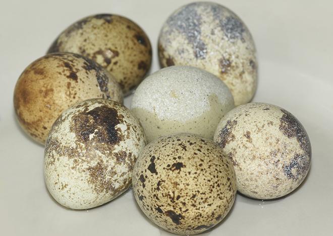 Количество кальция в рационе влияет на качество скорлупы яиц