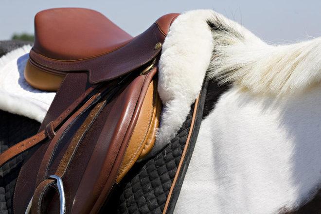 Правильно подобранное седло поддерживает здоровье лошади и наездника