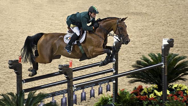 Ганноверская порода ценится в конном спорте