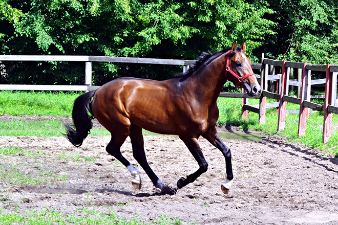 Требования к мускулатуре и строению лошади высокие