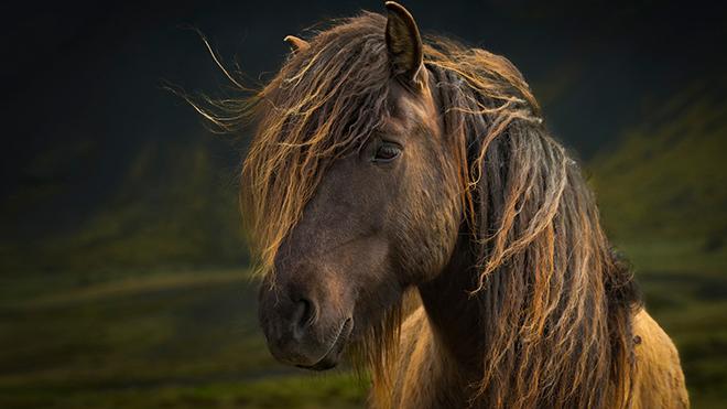 За гривой лошади требуется уход