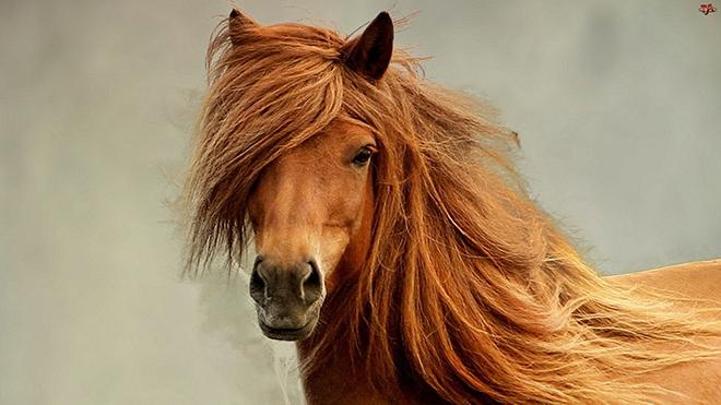 Грива отражает здоровье лошади