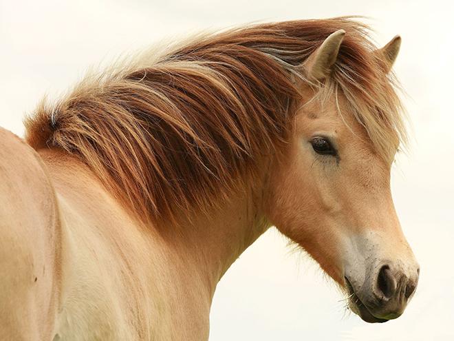 Грива у лошади - это не только украшение