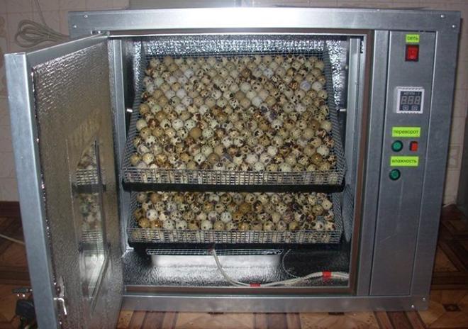 Для успешной инкубации яйца переворачивают