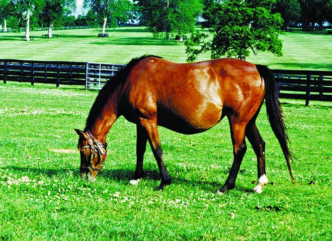 Беременности у лошадей проходят спокойно