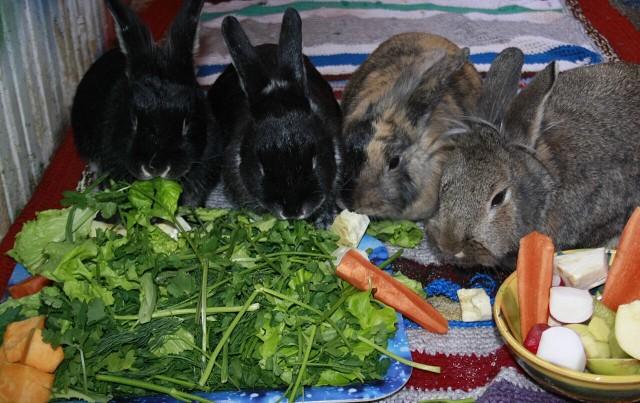 Сбалансированное питание кроликов