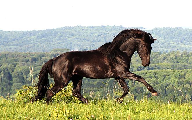 драгунский карачаевская порода лошадей видео колебания водного