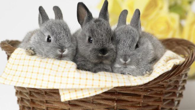 Приобрести несколько лотков, чтобы быстрее приучить кролика