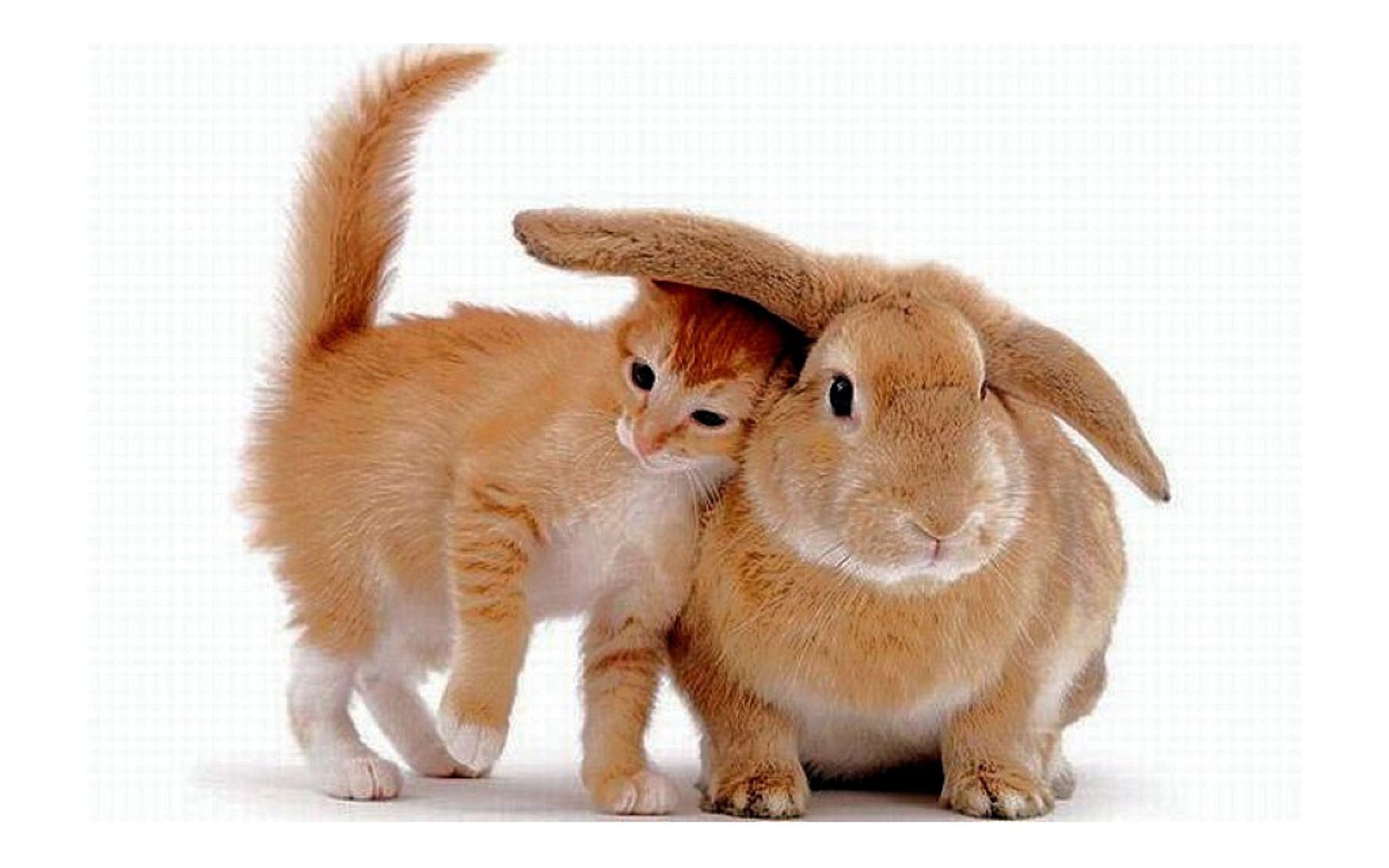 Кот и кролик в одном доме: как подружить питомцев?