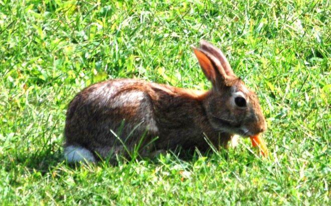 Нельзя кормить кроликов только тыквой