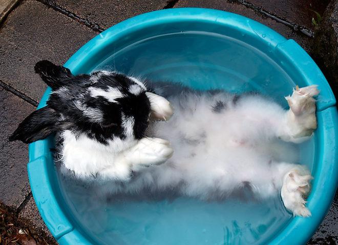 Кролики привыкают к мытью
