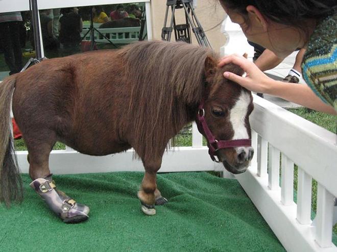 Одна из рекордсменок лошадь Тумбелина имеет вес 26 кг