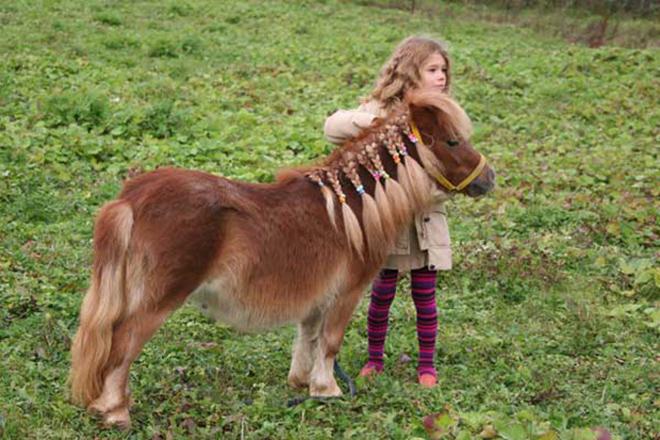 Маленькие лошади используются в работе с детьми