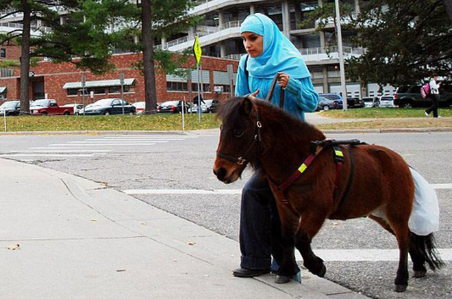 Мини лошади помогают незрячим людям
