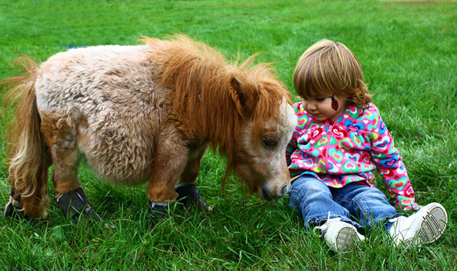 Для содержания мини лошади не нужно много места