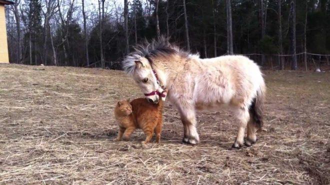 Пони нуждаются в свежем питье