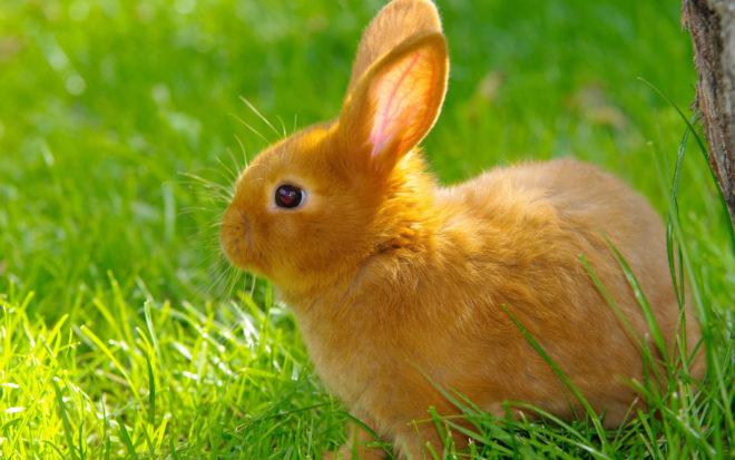 Необычное поведение у кролика может появиться из-за болезни