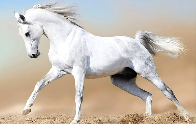 Походка лошади влияет на скорость