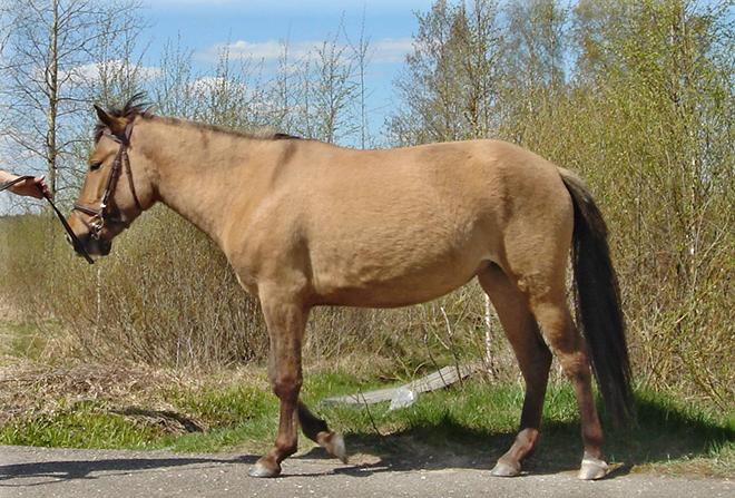 Башкирские лошади отличаются диким нравом