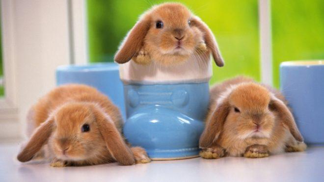 Купать кролика нужно в теплой воде
