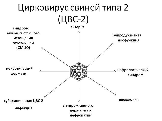 ЦВС имеет два подтипа.