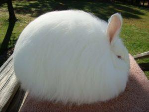 Вес кролика - 4 кг